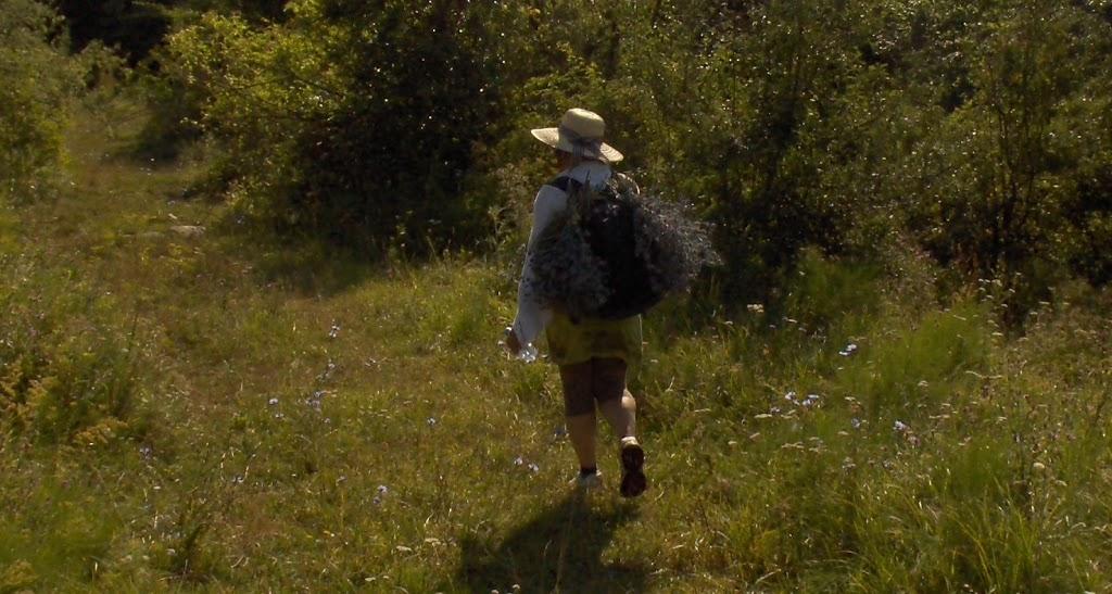 Kruidenwandeltocht in Transylvanië