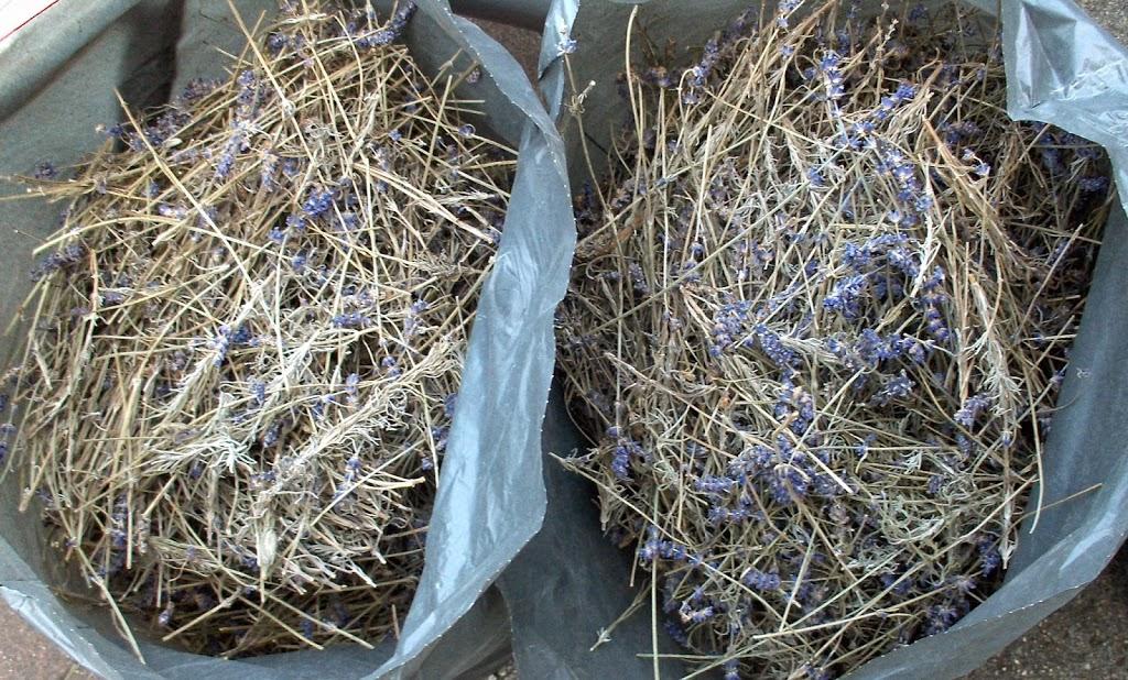 Zeeuwse Lavendel destilleren in opdracht