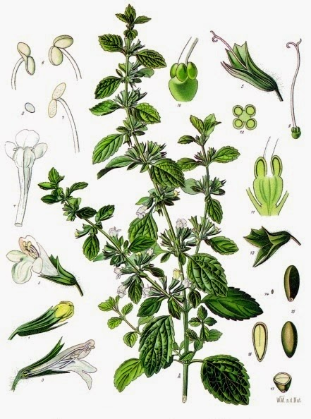 Co-destillatie van citroenmelisse met citroengras