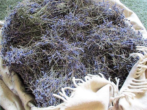 Lavendelolie uit Brabants voedselbos Zundert